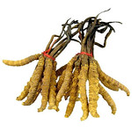 Did You Know? A 2017 functional study found out that Cordyceps sinesis and cordycepin enhances male reproduction by stimulating Leydig cells to produce testosterone in mice